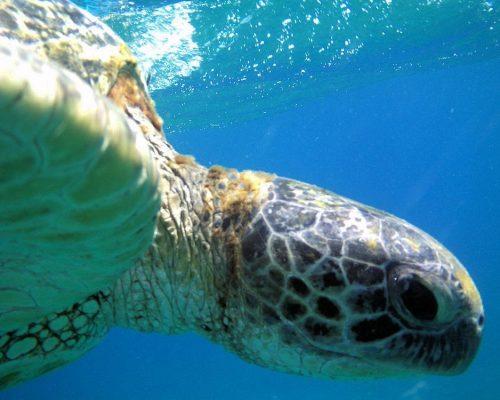 Spaans leren en duiken Bocas del Toro